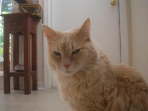 Tigger aka señor gato