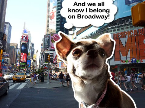 Chanel the Chihuahua on Broadway