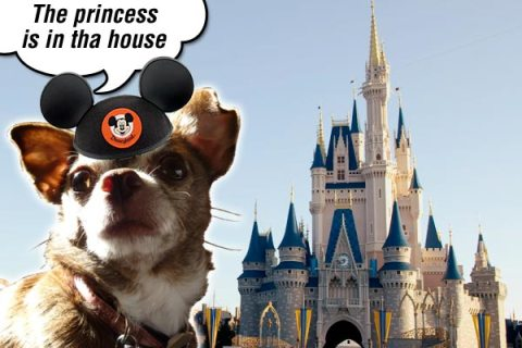 Chanel the Chihuahua has found her magic castle